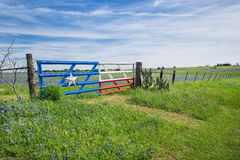 Texas bluebonnet field and fence in spring Royalty Free Stock Photography