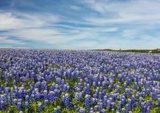Texas Bluebonnet hanno archivato ed il fondo del cielo blu nella curvatura di Muleshoe, Immagine Stock
