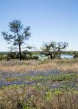 Texas Bluebonnet Landscape Stock Images