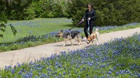 Texas Bluebonnet Trails. Ennis,Texas April 19, 2018 - Ennis, Texas Springtime bluebonnet trails which cover over 40 miles of Texas bluebonnet flowers stock images