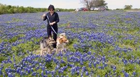 Texas Bluebonnet Trails. Ennis,Texas April 19, 2018 - Ennis, Texas Springtime bluebonnet trails which cover over 40 miles of Texas bluebonnet flowers stock photos
