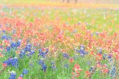 Texas Bluebonnet und indischer Malerpinsel blühen in Ennis, Texas, Lizenzfreies Stockbild