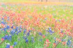 Texas Bluebonnet und indischer Malerpinsel blühen in Ennis, Texas, Stockfotos
