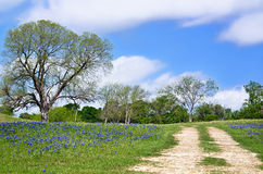 Texas bluebonnet vista along country road. With beautiful blue sky and white clouds Royalty Free Stock Images