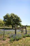 Texas Bluebonnet Wildflower Landscape-omheining stock afbeeldingen