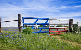 Texas bluebonnets along a fence in spring Stock Image