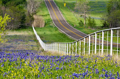 Texas bluebonnets along the road side Stock Photos