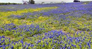 Texas Bluebonnet Trails. Stock Images