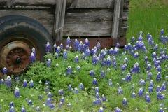 Texas Bluebonnets en Wagen Stock Foto