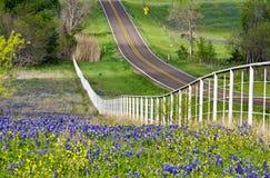 Texas-Bluebonnets entlang der Straßenseite stockfotos