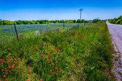 Texas Bluebonnets et pinceau stupéfiants dans un domaine photos libres de droits