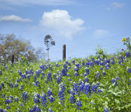 Texas Bluebonnets on hillside with windmill in background Stock Photo