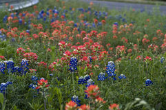Texas Bluebonnets & Wildflowers by the Road. Bluebonnets and Indian Paint Brushes are very populous along the Texas roadways this year (2010 Royalty Free Stock Photos