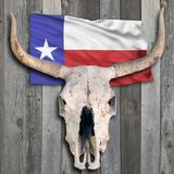 Texas Cow Skull Fotografia Stock