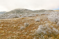 Texas Desert após uma tempestade de gelo Fotografia de Stock