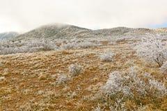 Texas Desert efter en isstorm Arkivbild