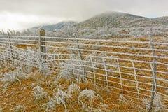Texas Desert en una tormenta de hielo del invierno Imagenes de archivo
