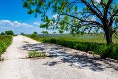 Texas Dirty Road med Texas Bluebonnet Wildflowers Arkivfoton