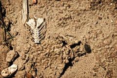 Texas Drought Royalty-vrije Stock Afbeeldingen