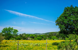 Texas Farm Lands June Rains wild flower Barb Wire Fence Royalty Free Stock Photo
