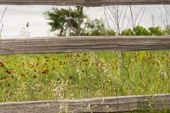 Texas Field av blommor Royaltyfria Foton
