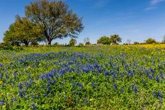 Texas Field Covered con diverso Texas Wildflowers Fotografía de archivo