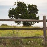 Texas Field von Blumen Stockbild