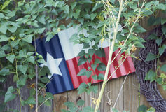 Texas Flag Fotografia Stock