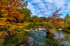 Texas Foliage Bursting with Color Surrounding a Cr Royalty Free Stock Image