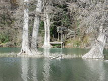 Texas Guadalupe River Bank with trees Stock Photos