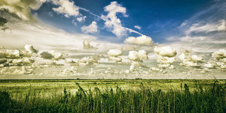 Texas Gulf Coast Salt Marsh. Landscape of coastal salt marsh near High Island, Texas Stock Images