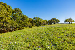 Texas Hill Country Stock Photography