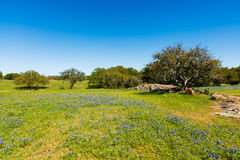 Texas Hill Country Stock Image