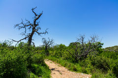 Texas Hill Country. The natural beauty of a nature trail in the Texas Hill Country Royalty Free Stock Image