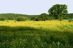 Texas Hill Country Pasture royalty free stock image