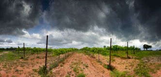 Texas Hill Country Vineyard stock photography
