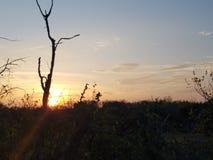 Texas himmel Fotografering för Bildbyråer