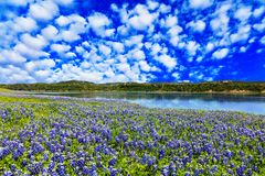 Texas kulleland royaltyfria bilder