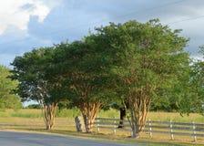 Texas land med ett staket och stora träd arkivfoton