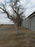 Texas Landscape cerca de los PECO Imagen de archivo
