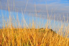 Texas Landscape - Golden Grasses with Butte. Texas Windmills with Blue Sky and Golden Waves of Native Grassess Stock Photography