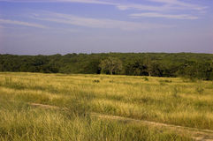 Texas Lanscape Royalty Free Stock Image