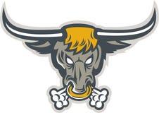 Texas Longhorn Bull Head Front Stock Image