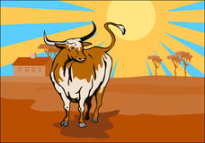 Texas longhorn bull prairie Royalty Free Stock Photos