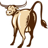 Texas Longhorn Bull Rear View Retro Stock Image