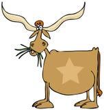 Texas longhorn Royalty Free Stock Photos