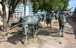 Texas longhorns forming a part of a huge bronze monument of 40 larger-than-life longhorns in Pioneer Plaza in Dallas, TX. Dallas, Texas, United States of America royalty free stock photography