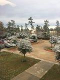 Texas nevado Fotografia de Stock