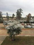 Texas nevado Imagens de Stock Royalty Free