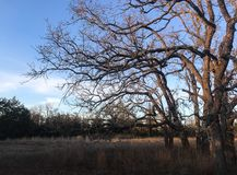 Texas Prairie at Sunset. A grassy prairie with trees. Photo was taken at sunset, with a mostly clear sky Stock Photo